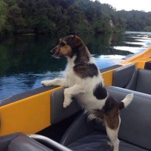 Jet Boating New Zealand - Rapids Jet